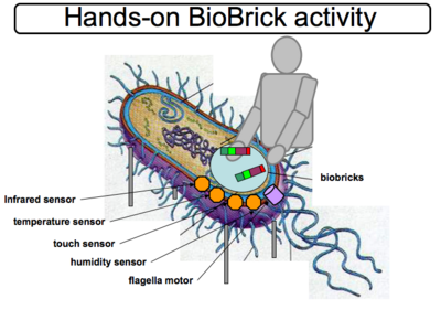 We use Bio Bricks (like lego bricks) to build biological systems